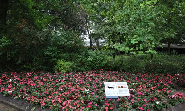 25TH JUNE 2018 SunPatiens® Supports ARTIS Amsterdam Royal Zoo