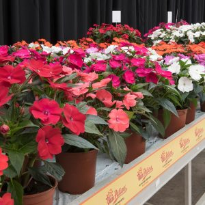 Sunpatiens® Table Banner Pot And Label